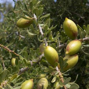 argan fruit, best non-comedogenic oils