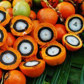 best body butters, tacuma fruit