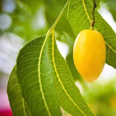 best plant oils for skin, neem