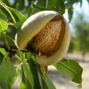 sweet almond, best carrier oils for skin