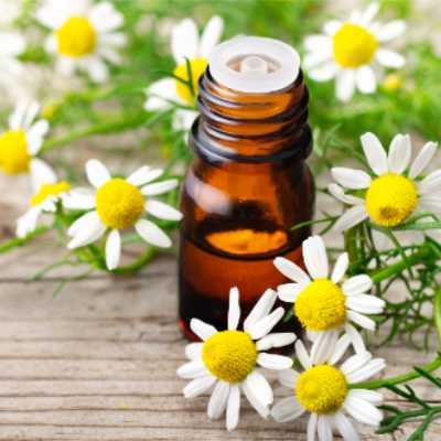 chamomile flowers and essential oil