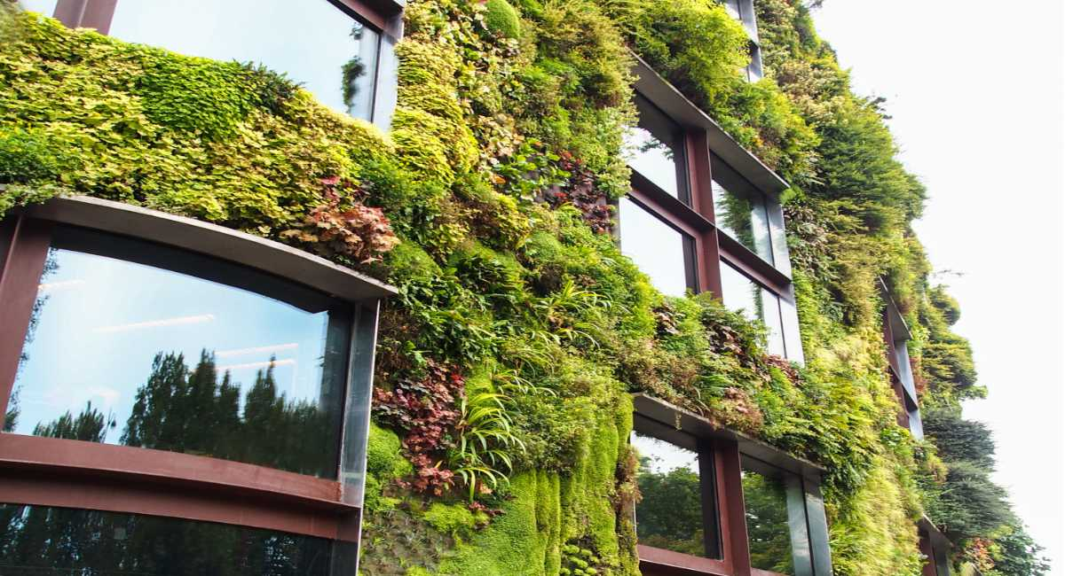 Building With Eco-friendly Green Wall